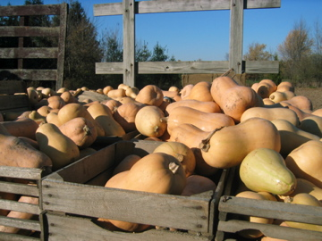 Butternut squash mountain